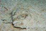 바닷속 세상이야기-그 곳에도 삶이 있다 <2> 바다동물의 위기탈출