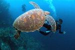 바닷속 세상이야기-그 곳에도 삶이 있다 <3> 이야기 속 주인공 된 바다생물