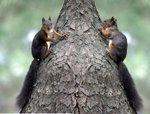 부산환경교육센터와 함께 하는 환경 이야기 <6> 청설모가 다람쥐를 잡아먹어?