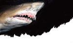 바닷속 세상이야기-그 곳에도 삶이 있다 <4> 위험한 바다동물1