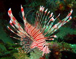 바닷속 세상이야기-그 곳에도 삶이 있다 <5> 위험한 바다동물 2
