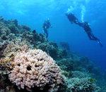 바닷속 세상이야기-그 곳에도 삶이 있다 <6> 생명의 바다 척도,  산호