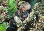 바닷속 세상이야기-그 곳에도 삶이 있다 <10> 성전환하는 어류