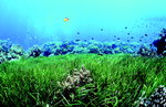 바닷속 세상이야기-그 곳에도 삶이 있다 <12> 에필로그