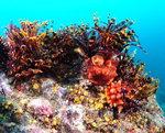 살아 숨쉬는 부산바다 <4> 나무섬의 산호서식지