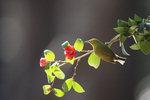 [영상에세이 뷰-파인더] 붉게 멍든 꽃잎 고요한 조매花