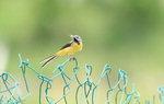 [영상에세이 뷰-파인더] 노랑할미새의 '치맛바람'