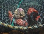 살아 숨쉬는 부산바다 <8> 폐그물에 대한 대책