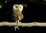 [영상에세이 뷰-파인더] 숲 속 보금자리를 지키는 매서운 모성의 눈