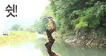 물총새, 2초 만에 물고기 사냥