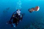 '살아 숨쉬는 부산바다' 사진으로 생명력 기록