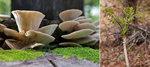 [그림으로 읽는 책 한 권] 산과 들에서 얻은 약초·나물…자연이 준 건강한 선물이자 축복