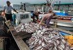 남해안 적조 비상…양식어류 집단 폐사