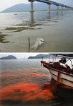 바다는 적조·강은 녹조…경남은'녹초'
