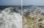 부산 바다까지 적조 확산