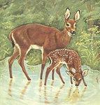공재동의 아동문학 세상 <33> 펠리스 잘텐의 아기 사슴 밤비