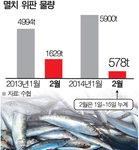 어획량 급감 멸치 값도 고공행진