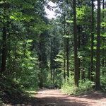 전남 장성 축령산 치유의 숲