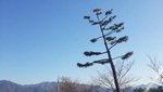 주석 스님의 하얀 연꽃 <11> 낭중지추