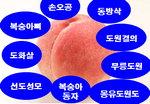 [박기철의 낱말로 푸는 인문생태학]<278> 복사꽃과 복숭아 : 사연 많은 과일