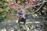 가을 맞은 전남 구례 산수유 마을