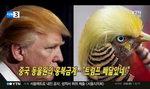 트럼프 닮은꼴...압권은 홍복금계