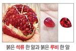 [박기철의 낱말로 푸는 인문생태학]<287> 석류와 루비: 꼭 닮은 모습