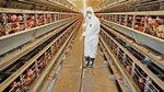 [스토리텔링&NIE] 닭이 독감에 걸리면 왜 위험하냐고?