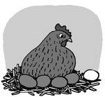 [도청도설] 흰 달걀, 노란 달걀