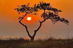 [포토에세이] 태양 품은 소나무