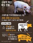 구제역 A형 백신접종 안해…돼지 1100만 마리 대참사 우려
