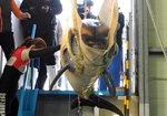 '돌고래 무덤'된 장생포 고래생태체험관