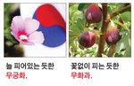 [박기철의 낱말로 푸는 인문생태학]<297>무궁화와 무화과 ; 상반되는 꽃들