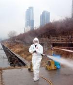 한강 인근 쇠기러기 사체서 또 AI 바이러스... '고병원성' 확인은 언제?