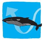 [도청도설] 고래의 진화