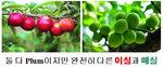 [박기철의 낱말로 푸는 인문생태학]<298> 이실과 매실;자두나무와 매화나무 과일