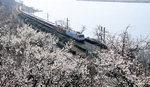 봄을 향해 내달리는 열차