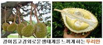 [박기철의 낱말로 푸는 인문생태학]<300> 두리안과 람부탄 등; 다양한 열대과일들