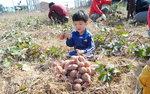 힐링 으뜸촌 <12> 김해 칠산참외정보화마을