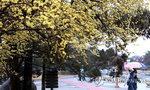 """주말날씨, 부산 포함 전국 흐리고 비..기상청 """"기온 평년과 비슷하거나 낮아"""""""