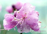 〈오늘날씨〉 전국 대부분 비소식…오전에 그쳐(29일)