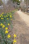 봄꽃의 런웨이, 봄마중 가는 중…진주 경남수목원
