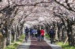 [포토에세이] 봄으로  가는 터널