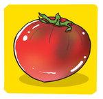 [도청도설] 대저 짭짤이 토마토
