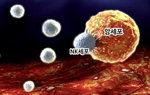 NK세포 활성도 검사로 암 예방하세요