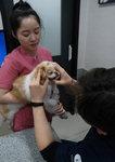 또 하나의 가족 '노령 반려동물' 건강관리법