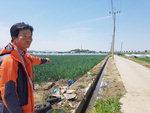 수확 앞둔 김해 양파밭 침수 날벼락