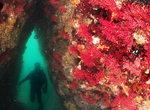 박수현 기자의 Sea 애니멀 <86> 빨간부채꼴 산호