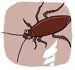 [도청도설] '바퀴벌레 친박'