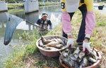 온천천 찔끔비에 오수 넘쳐 물고기 떼죽음